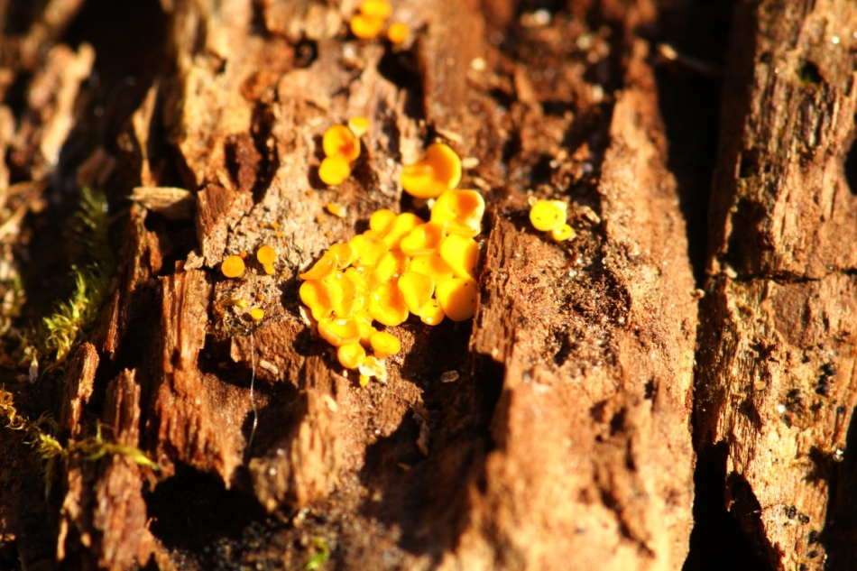 Tiny unidentified fungal objects