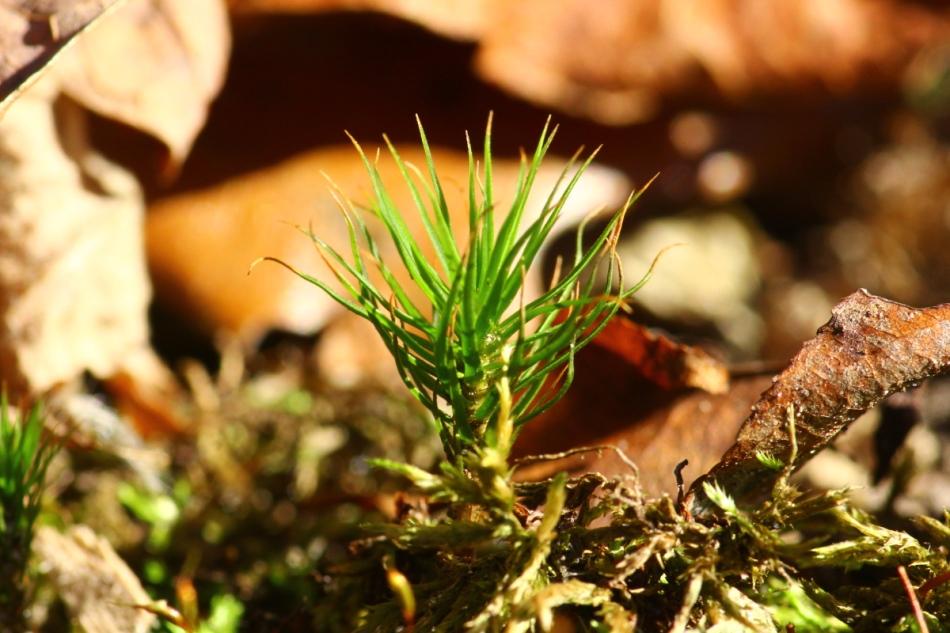 Unidentified moss