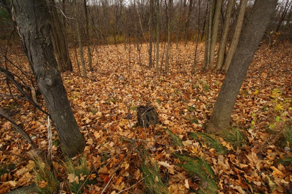 Fall woods