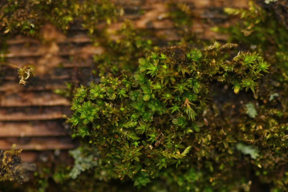 Mosses on a fence