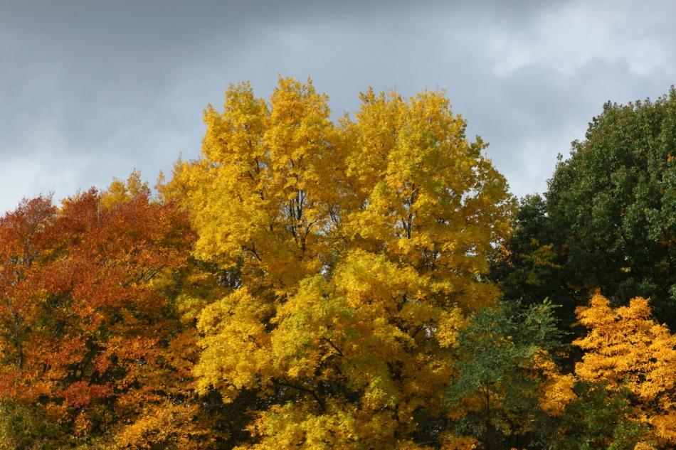 Creekside Park 3