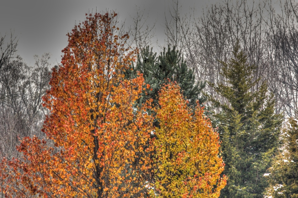 The last color, HDR 1