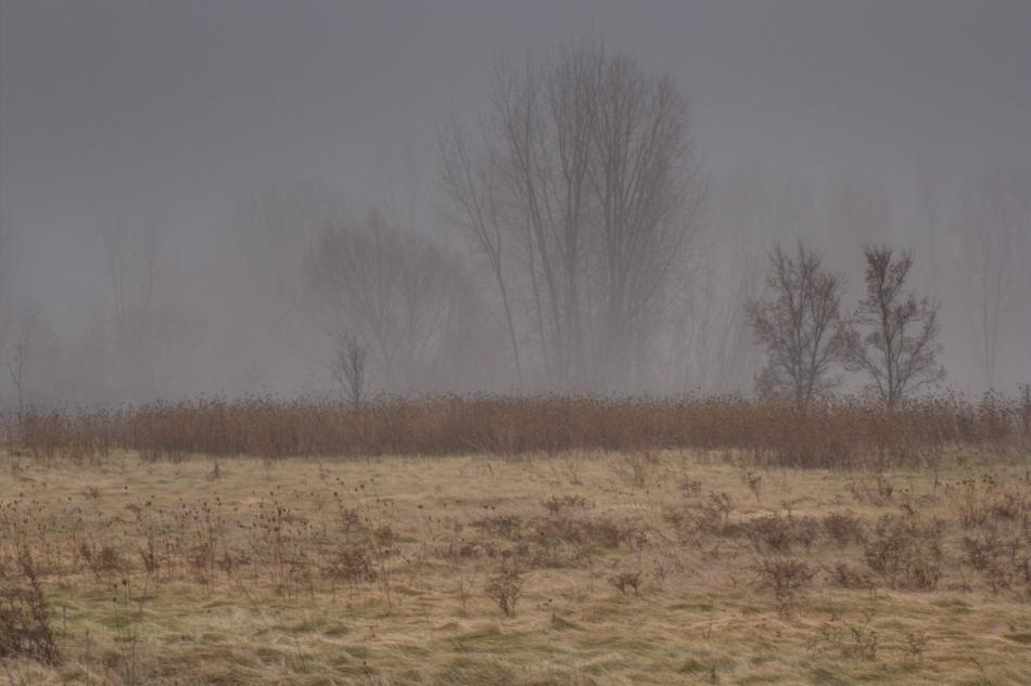 Foggy December day