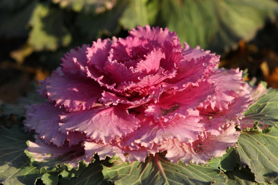 Unknown garden plant