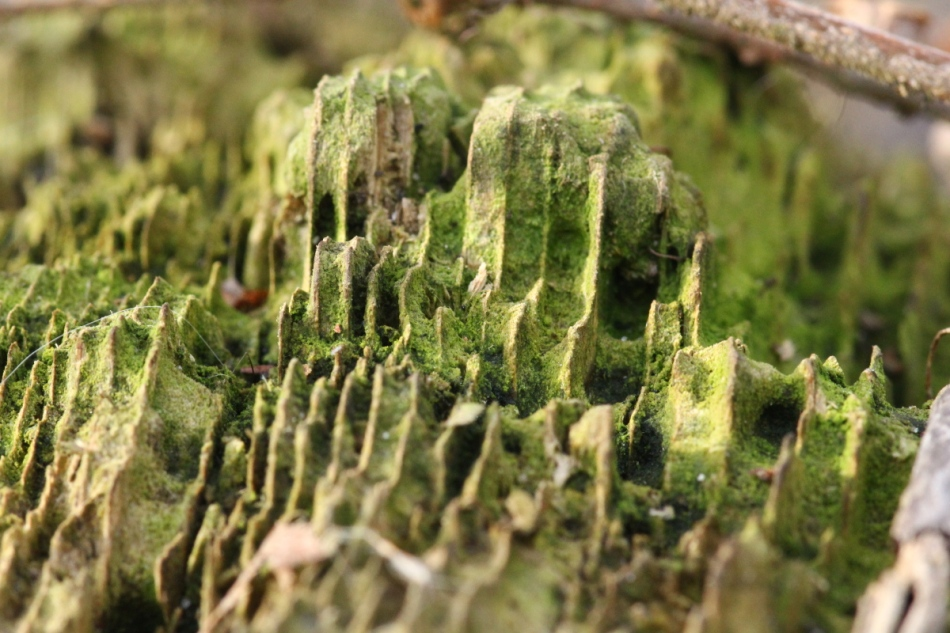 Stump close-up