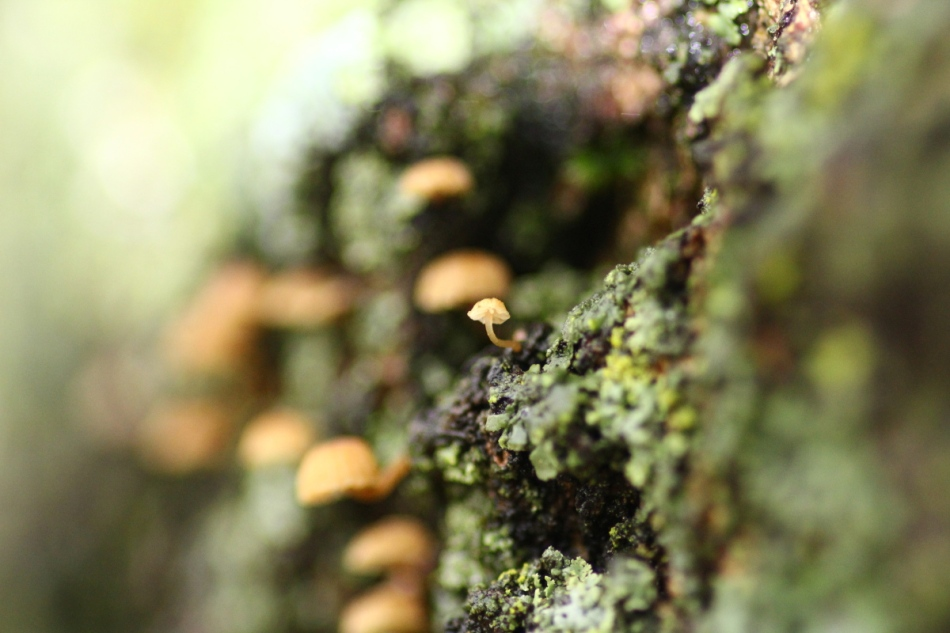 Tiny fungi and other growing things