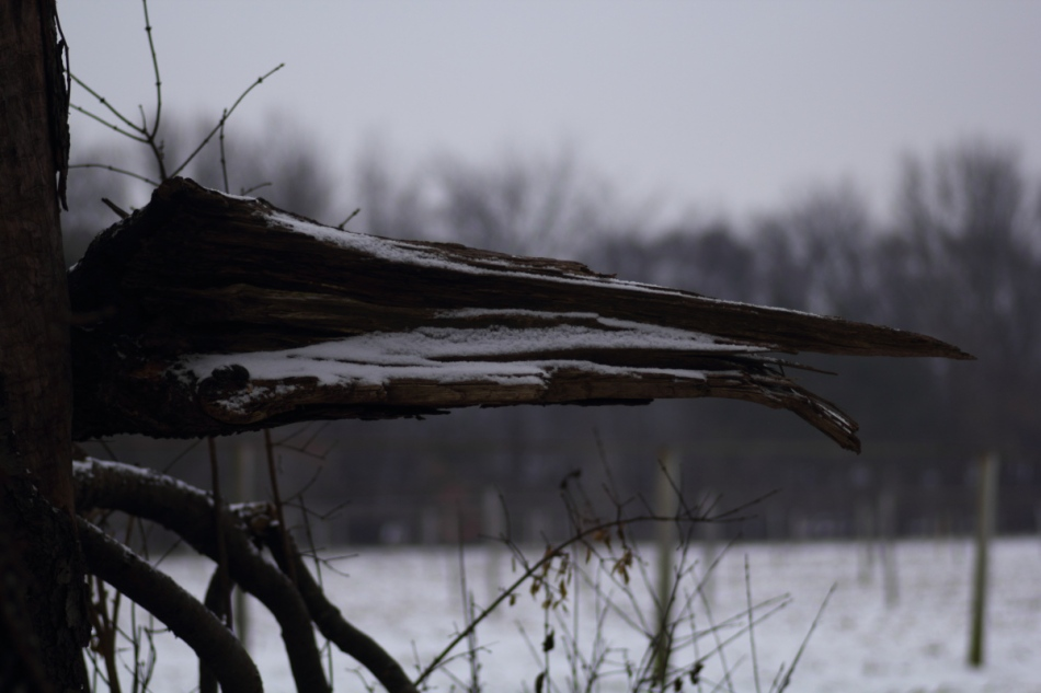 """wood"" stork"