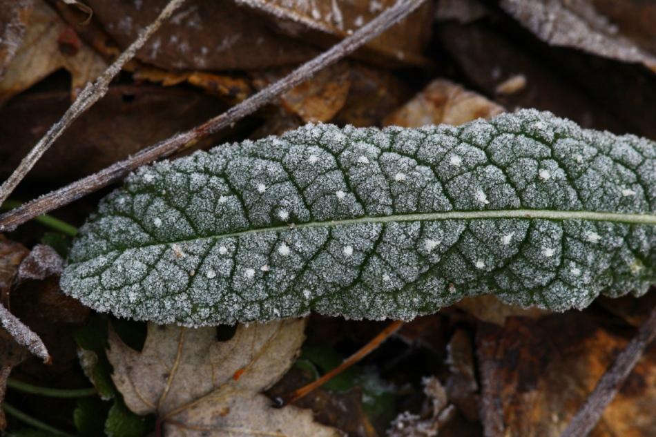 Frosty green 1