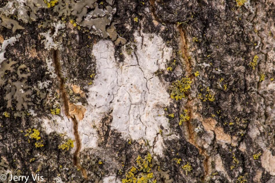 Lichen or fungi?