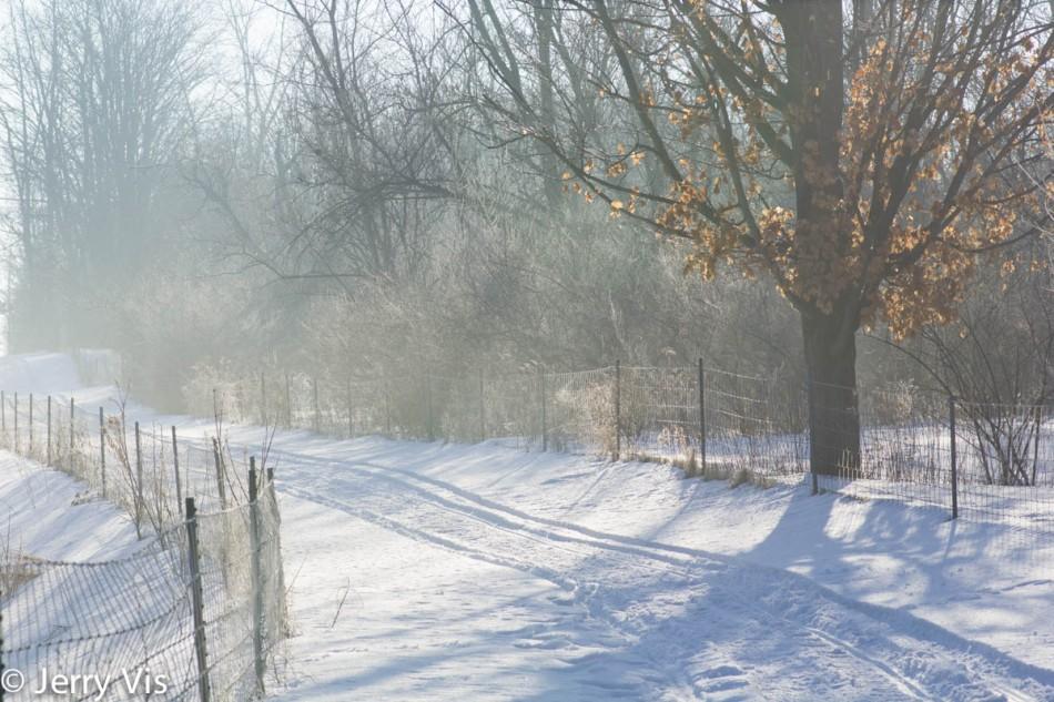 Misty, frosty morning
