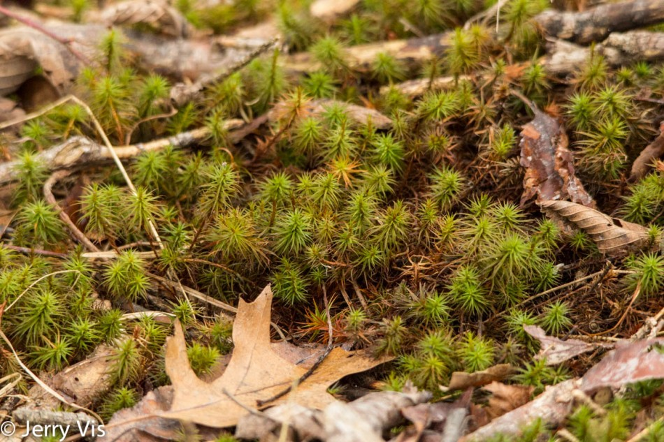 Moss or plant?
