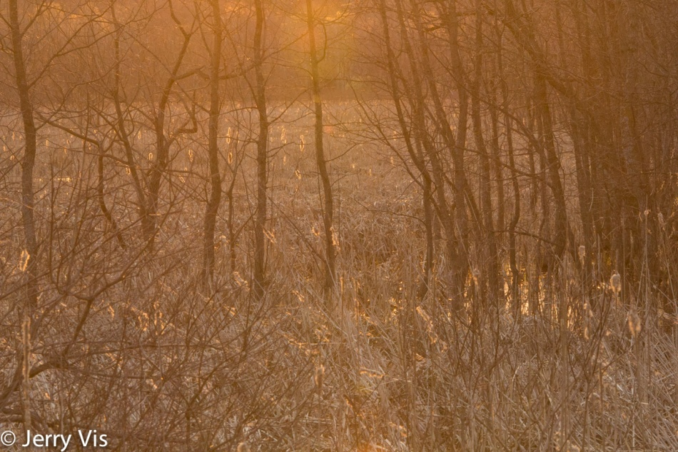 Dawn in the marshes