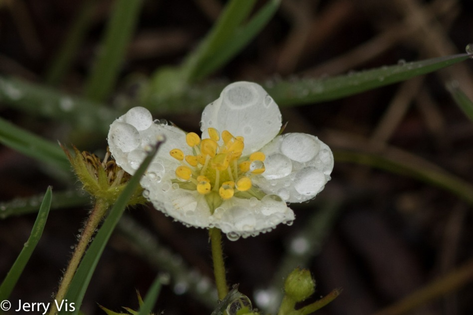 Unidentified flowering object in the rain