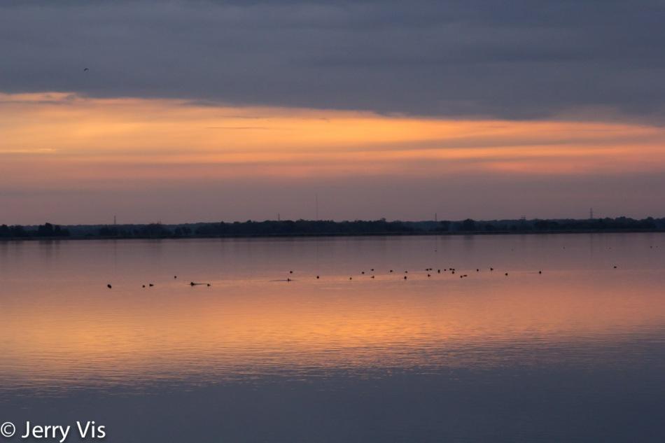 Ruddy ducks at sunrise