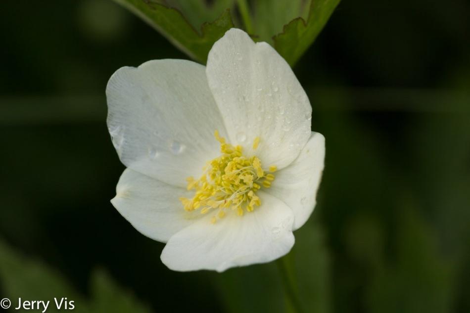 Unknown flowering object