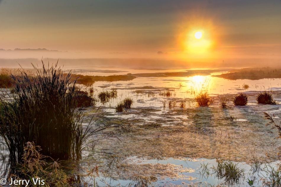 Misty morning marsh