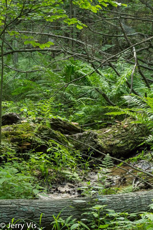 The woods at Loda Lake