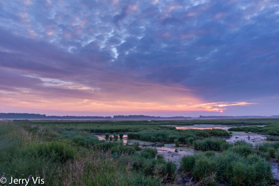 My favorite marsh at sunrise