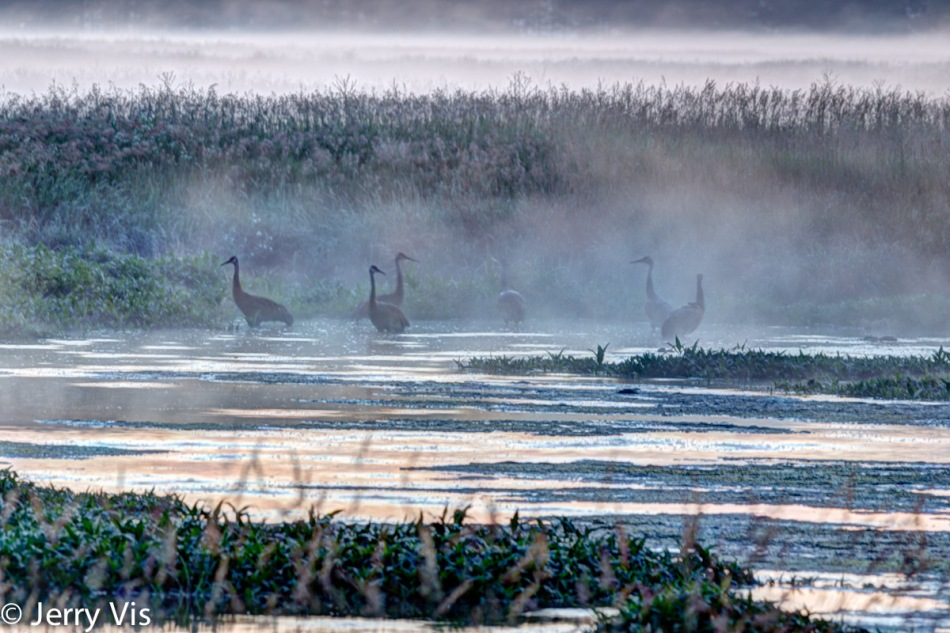 Sandhill cranes at dawn, HDR version