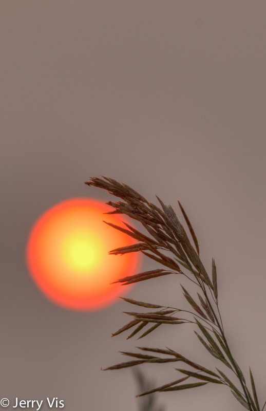 Grass and sunrise