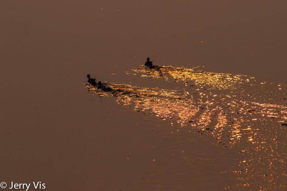 Glittery sunrise