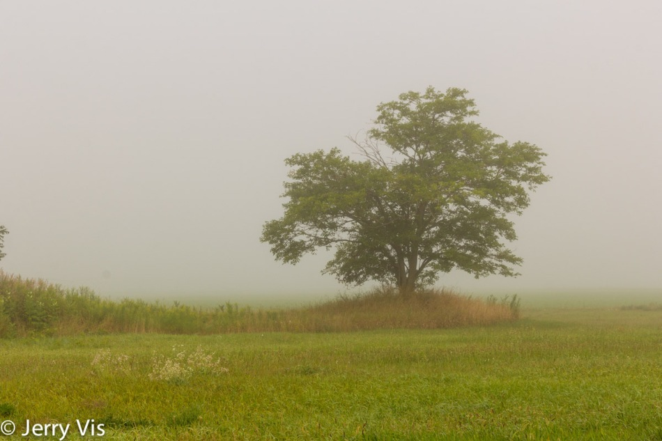 The obligatory lone tree in the fog