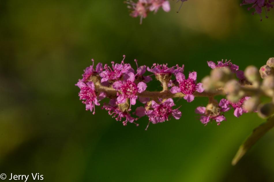 Unidentified marsh flower