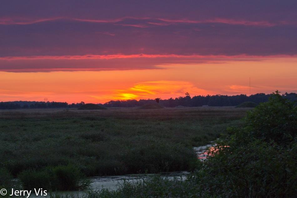 Great blue heron in flight at dawn