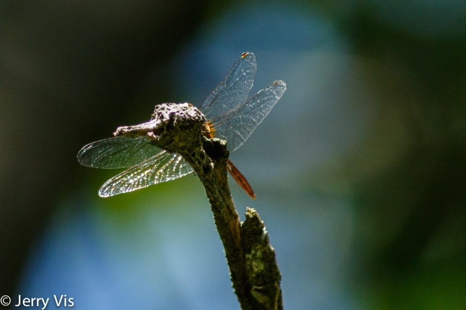 Dragonfly and dragon