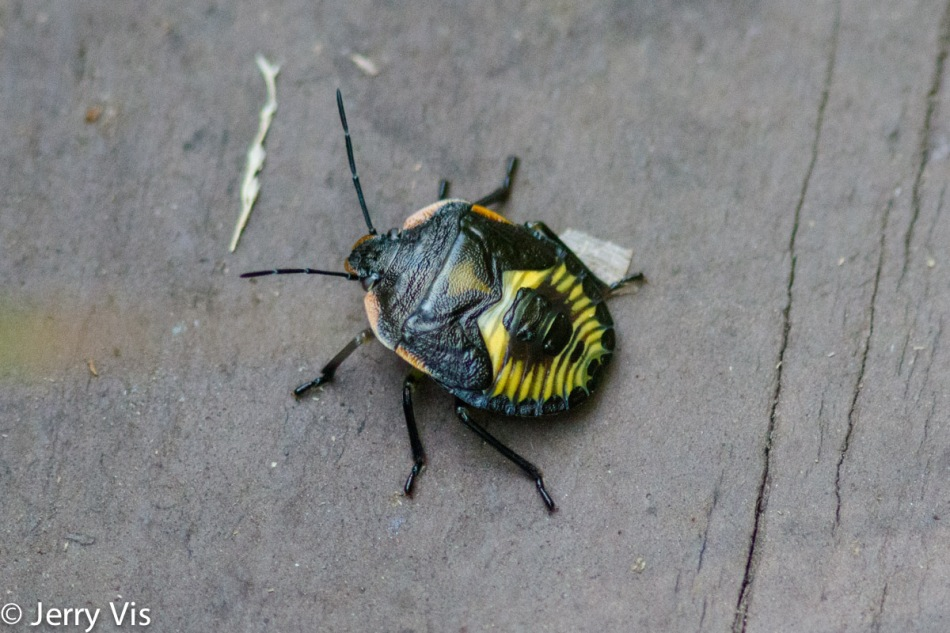 Unidentified colorful beetle