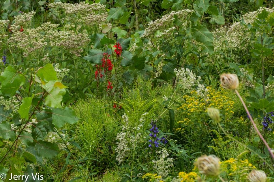 Nature's flower garden