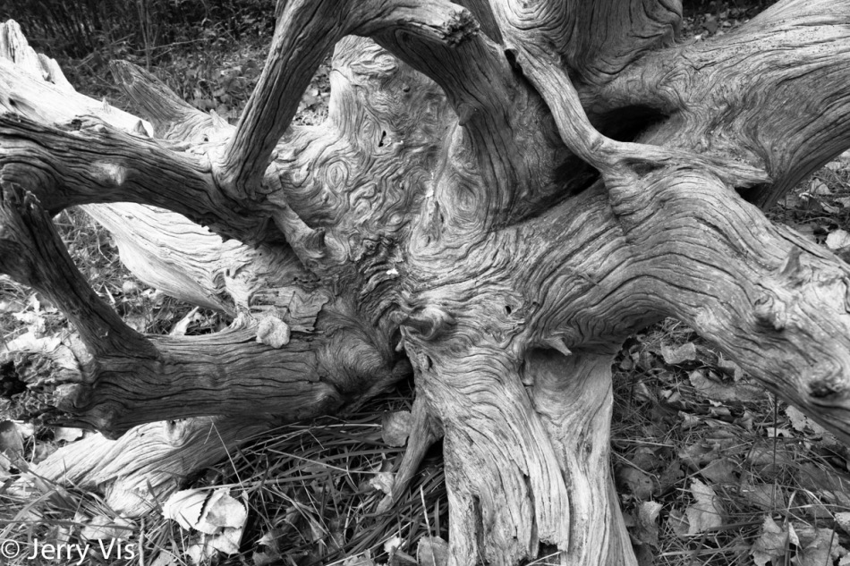 Weathered stump B&W