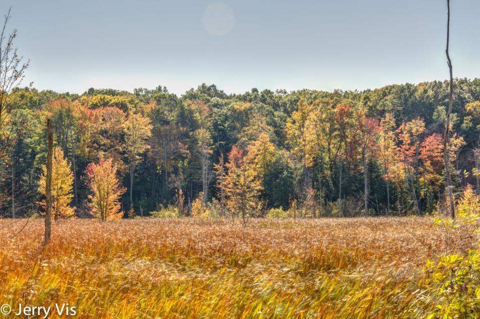 The marsh at Lane's Landing