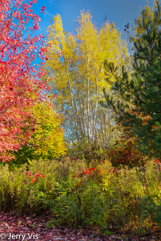 Fall colors at the Muskegon Lake Nature Preserve
