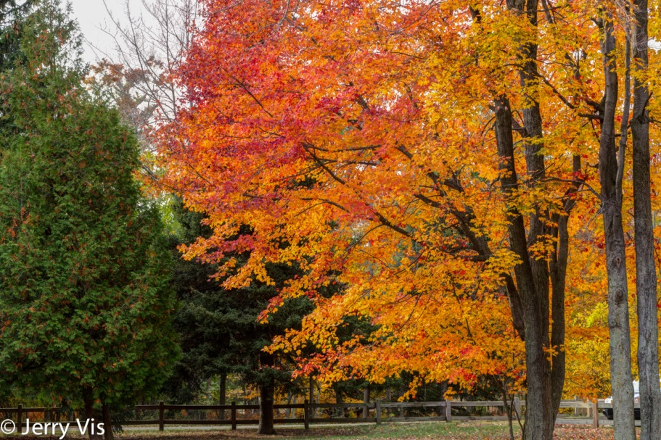 Fall colors, cloudy day at Muskegon SP 1