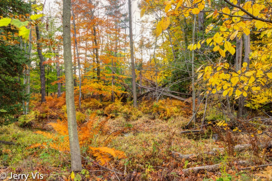 Fall colors, cloudy day at Muskegon SP 3