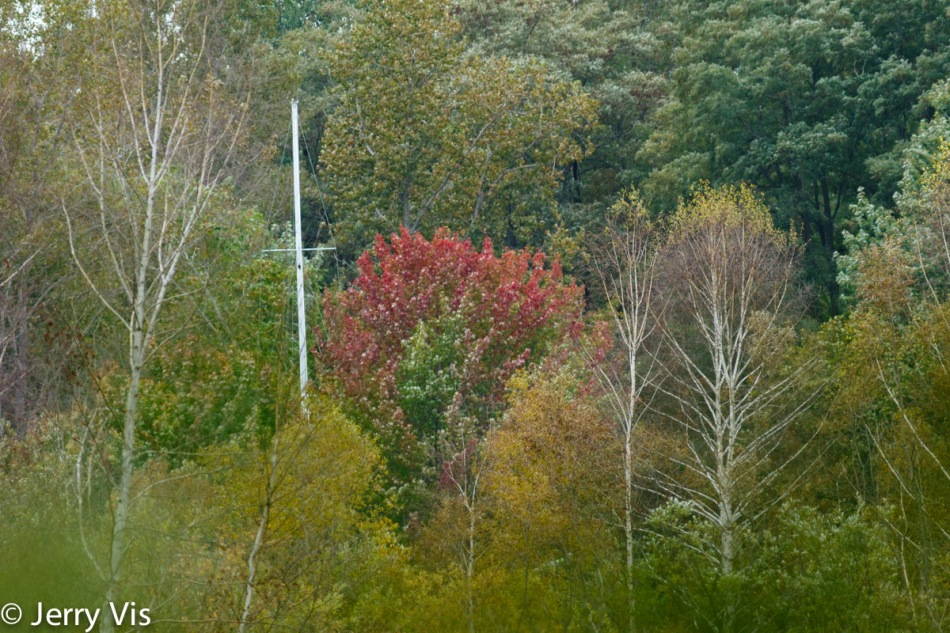 Sailboat mast in the fall foliage