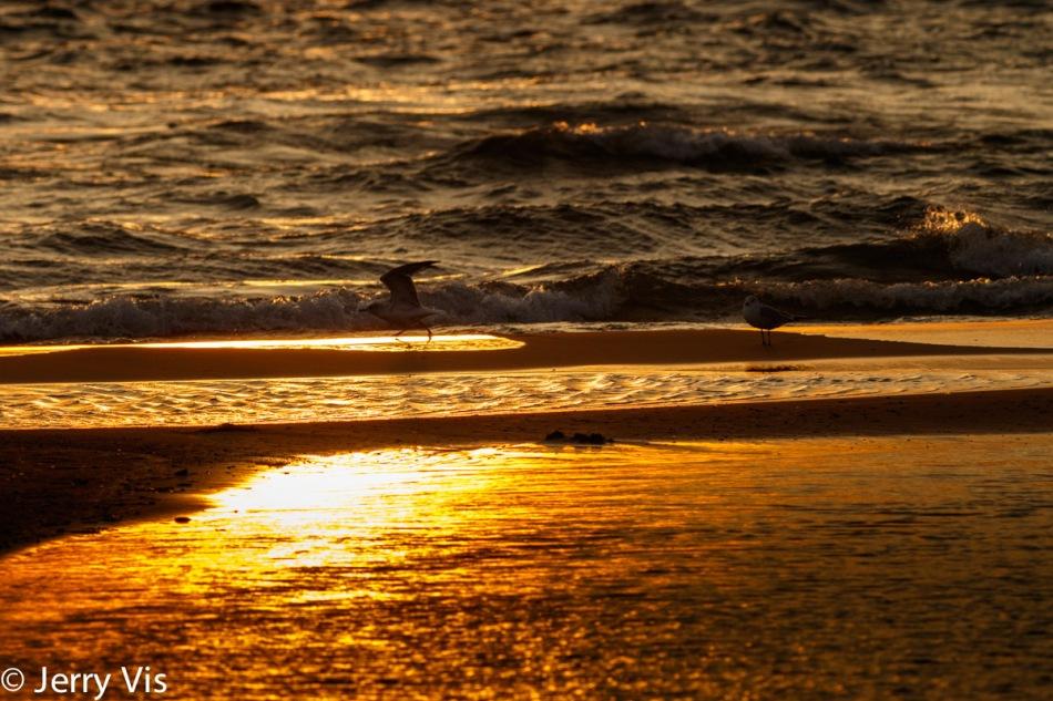 Gulls on the beach 3