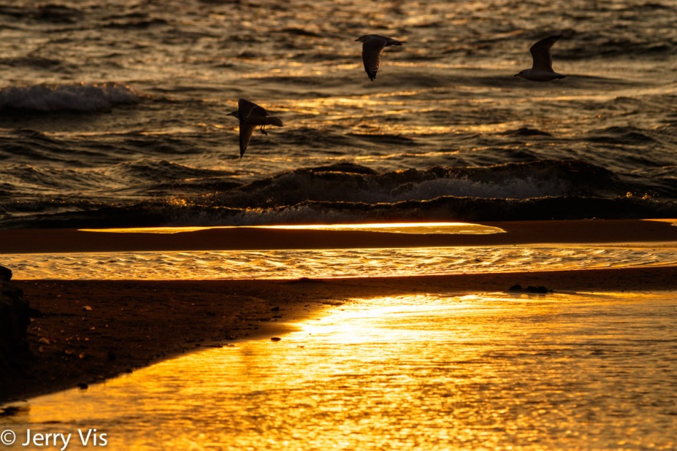 Sunset at the Duck Lake channel with gulls in flight