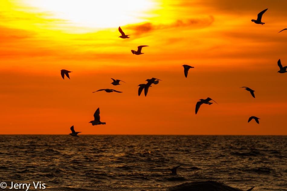 Birds of fire 2