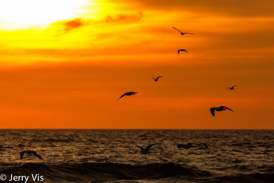 Birds of fire 3