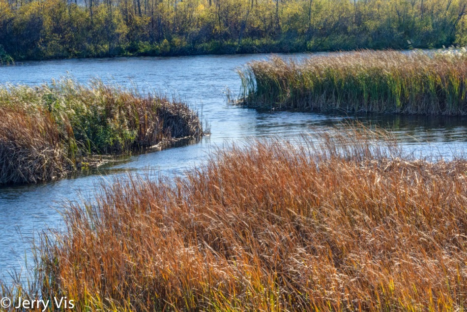 The marsh at Muskegon Lake Nature Preserve 2