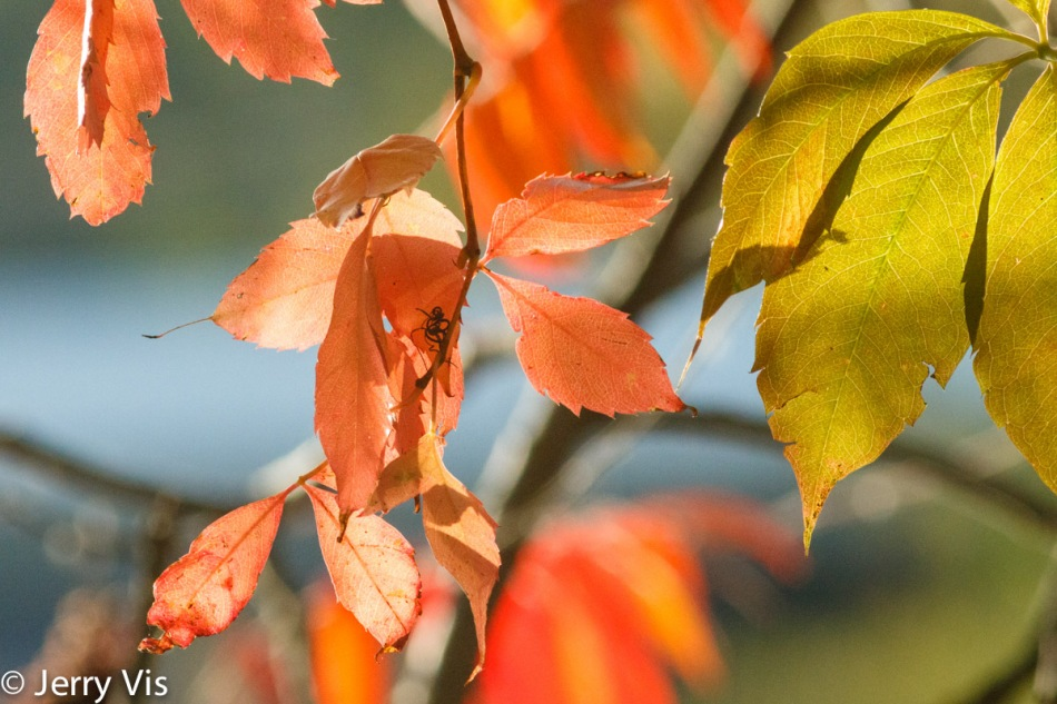 Pastel leaves in the fading sunshine