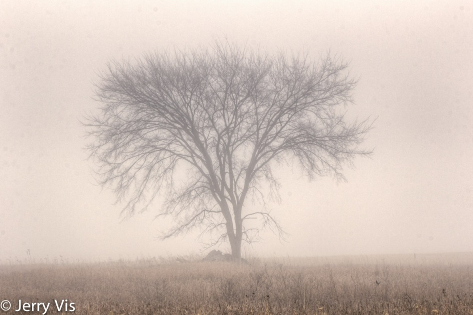 The cliched lone tree on a foggy day