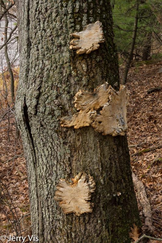 Harvested fungi?