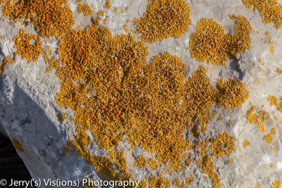 Lichens on a pretty rock