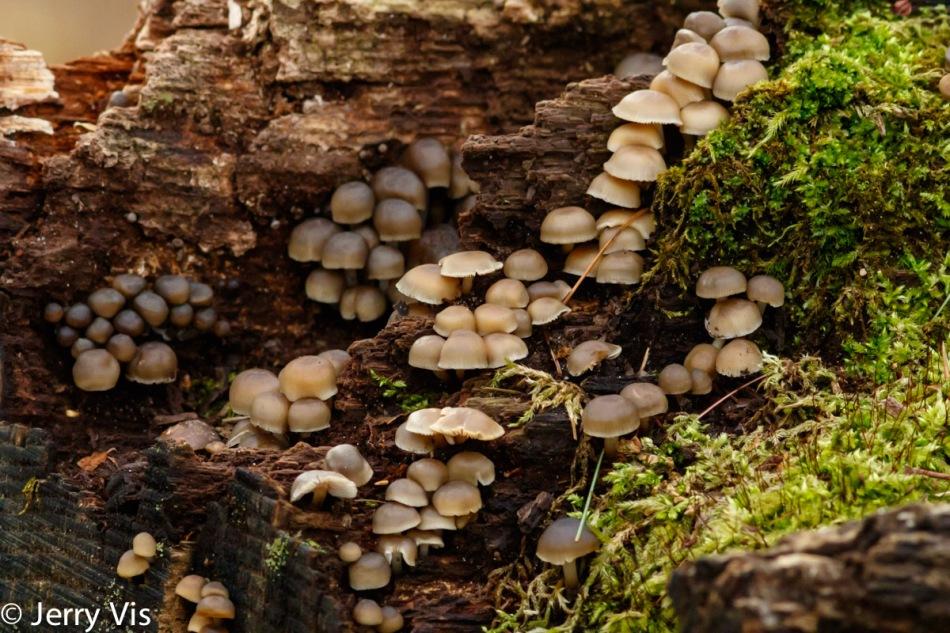 Fungi as art