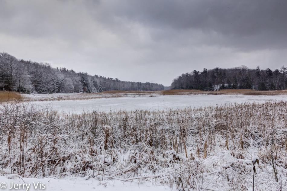 Marsh near Duck Lake