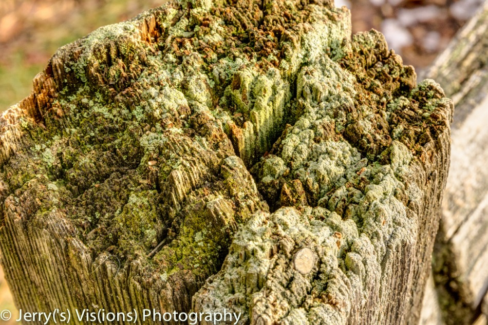 Lichen covered fence post