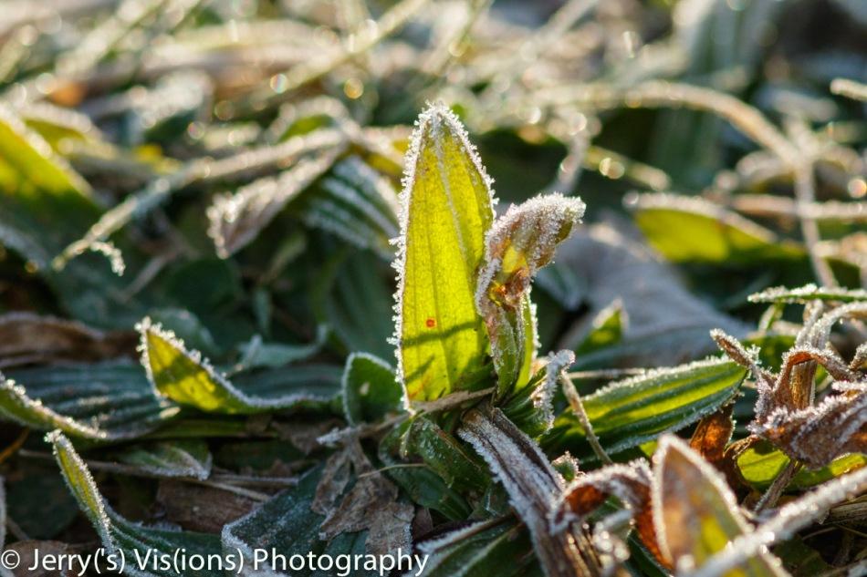 Frosty green
